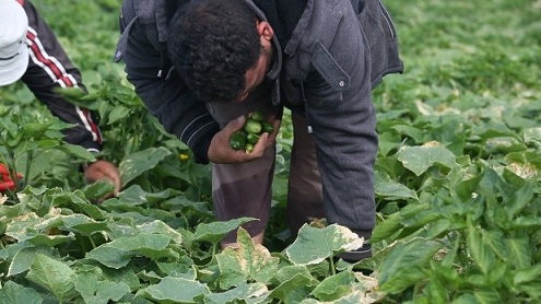 Gaza Farmers 2 resized.jpg