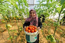 Supporting the livelihoods of farmers in Gaza
